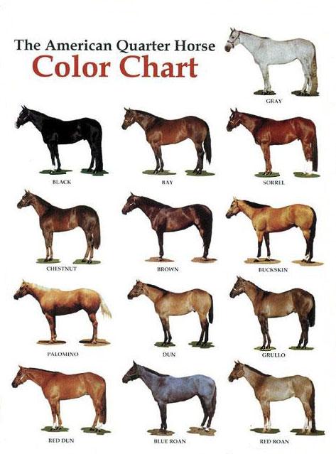 Farben des American Quarter Horse