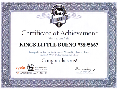 Kings Little Bueno - Certificate of Achievement