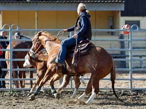 Cowhorse- Training mit Patrick Sattler und Maik Bartmann