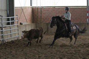 Ranch Cow Work: Clara Breuer und Kings Little Bueno