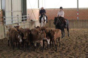 Ranch Cutting: Natalie Müller und Docs Royal Gold